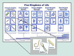 5 kingdoms of life. | Education - Homeschool | Pinterest ...