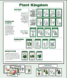 Printables Plant Classification Worksheet in print for children our 4 color plastic paper chart and cards represents the current classification of plant kingdom same as is used secondary college level